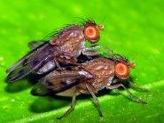 Двокрилі цікаві факти.  загін двокрилі: розмноження