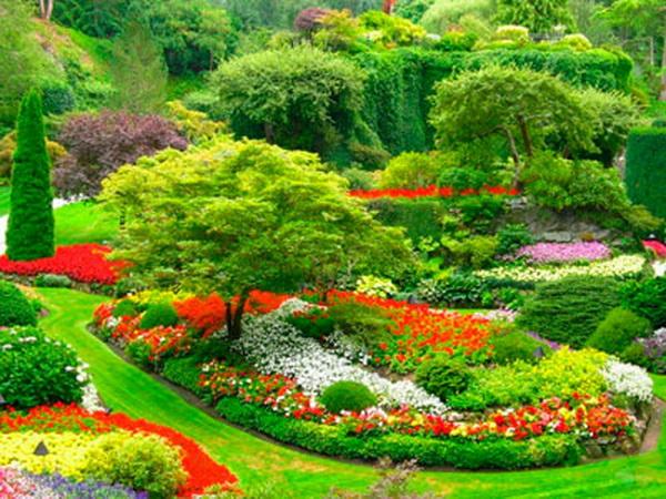 Назви кольорів для дітей. Квіти: основні різновиди та їх назви