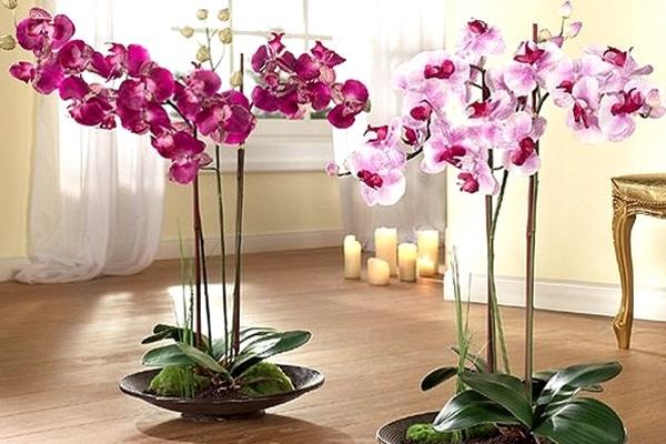 Чи можна дарувати орхідею на весілля. Чи варто тримати вдома орхідею-прикмети і забобони про квітку