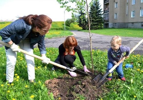 Як правильно викопати саджанець берези. Як посадити березу на ділянці: вибір місця, способи розмноження