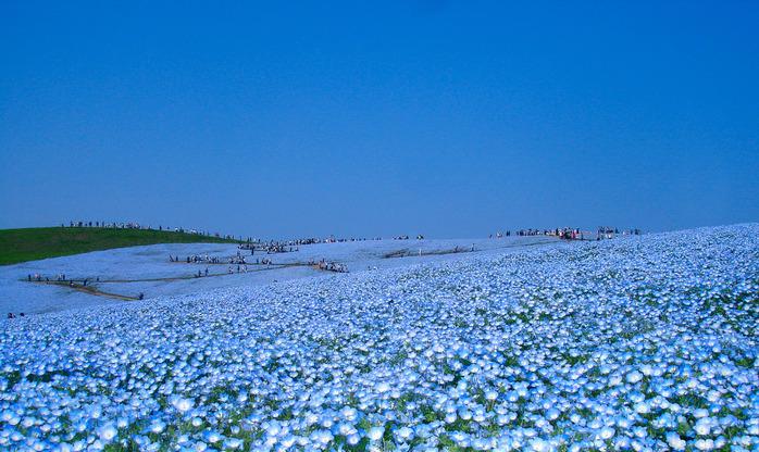 Національний приморський парк хітачі. Національний приморський парк хітачі, японія чудовий парк хітачі фото