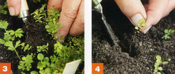 Розмноження дерев і чагарників за допомогою насіння. Секрети вирощування дерев з насіння або кісточок посадка насінням дерева і кущі