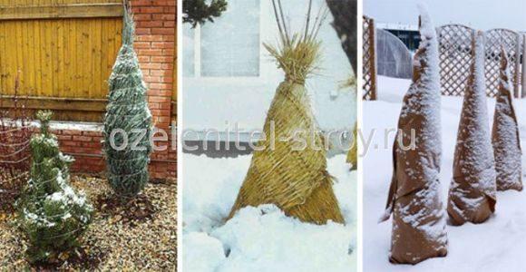 Як готувати рослини до зими. Правильна підготовка саду до зими