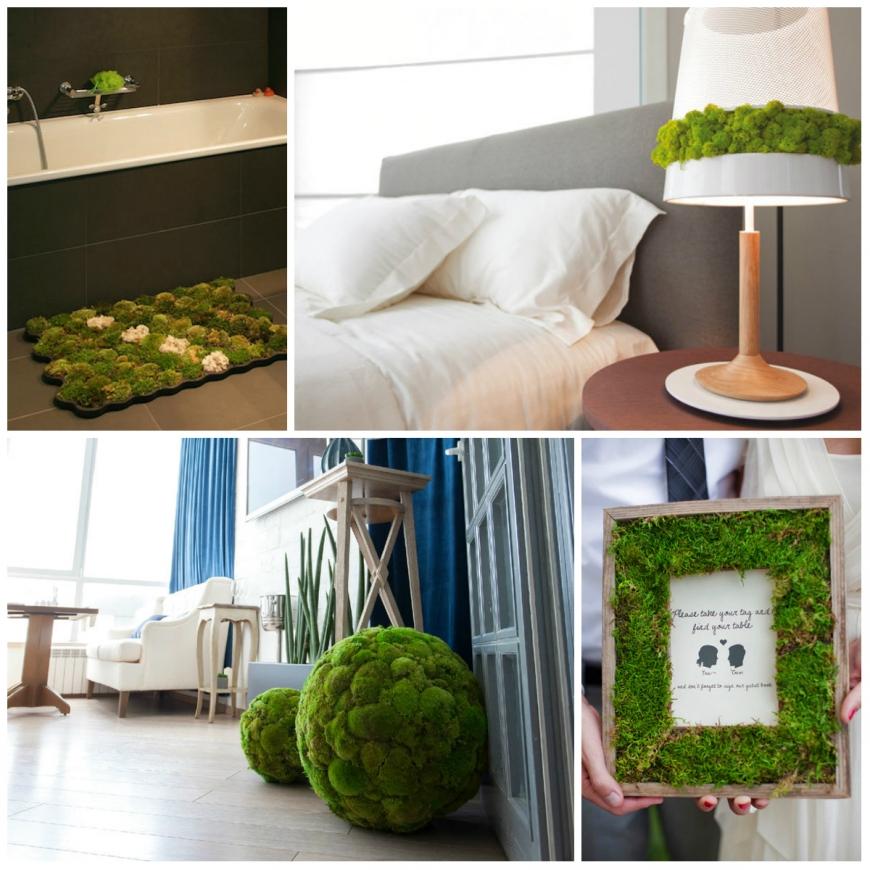 Озеленення будинку: живі стіни і композиції з мохів. Стіни з моху як зробити фарбу з моху