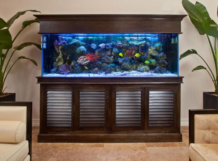Оформлення акваріума на 300 літрів. Можливі варіанти внутрішнього оформлення акваріума