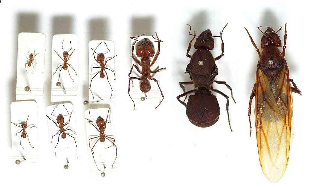 Цікаві факти про мурах. Мураха, заняття за рідною природою в старшій групі мураха загін комах