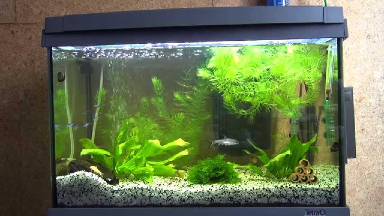 Як оформити акваріум на 300 літрів. Як створити оригінальний дизайн акваріума? обладнання та матеріали