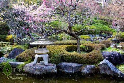 Рослини в японії з назвами. Квітка японська: опис, назви, особливості догляду та розмноження