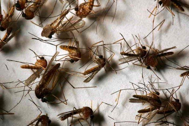 До чого сниться комар. Що означає образ комара уві сні-тлумачення