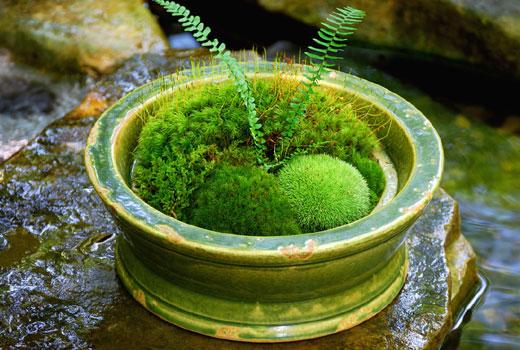 Малюємо картину з різноманітною листям. Чому сохнуть кінчики листя у кімнатних рослин? як зробити напис з моху на стіні