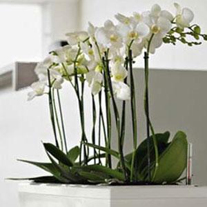 Дизайн орхідей в горщику. Горщики для орхідей: характеристика видів і критерії вибору