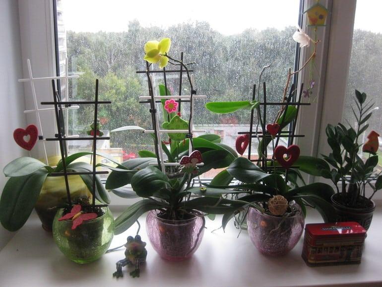 Колючі чагарники і дерева. З яких рослин можна зробити живопліт своїми руками. Вічнозелена стрижена живопліт