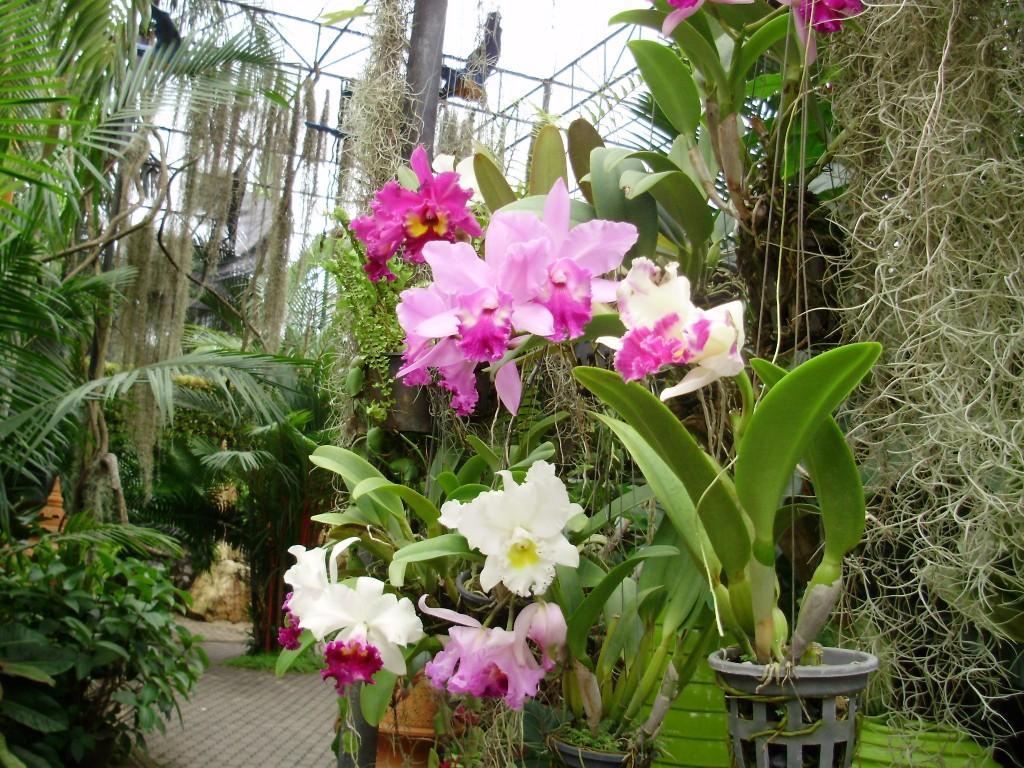В який грунт пересадити. Грунт для орхідеї фаленопсис який потрібен? інструменту знадобиться мінімум