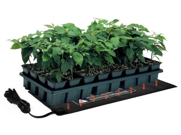 Як дізнатися схожість насіння. Перевірка насіння перців на схожість і передпосівне пророщування