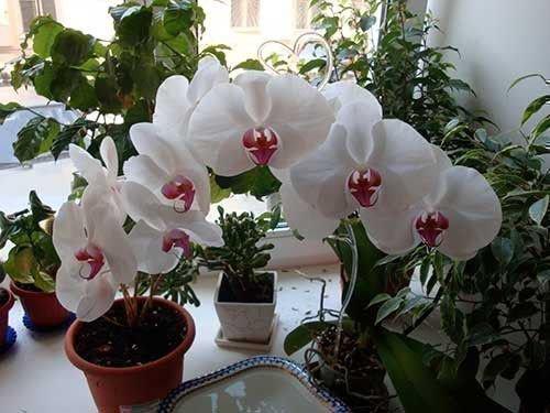 Прикмети повязані з орхідеями. Кому і коли дарувати орхідеї? значення кольору орхідей