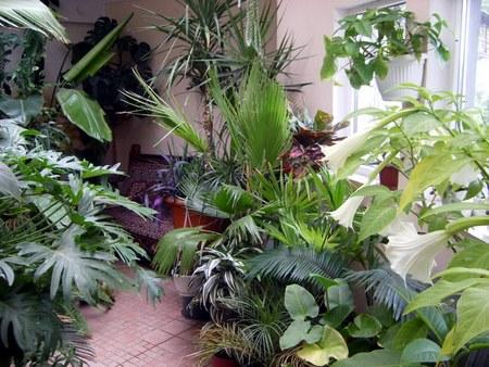 Догляд за орхідеєю в зимовий період. Догляд за орхідеями без вираженого стану спокою
