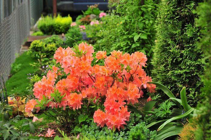 Що посадити в тіні і волозі. Що посадити в тіні за будинком з овочів і квітів? зона відпочинку та елементи декору