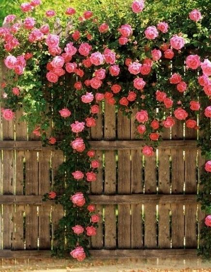 Багаторічні квіти для городу. Які квіти і декоративні рослини посадити на дачі: проектуємо квітники