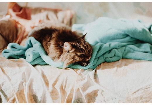 Синтепонове ковдру: прання без проблем. Синтепонова ковдра: властивості, температура прання в машині, віджимання як випрати синтепонову ковдру в пральній машині