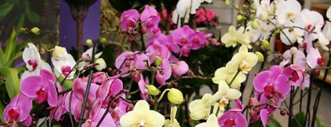 Чи можна дарувати жовті орхідеї. Чому орхідеї не можна тримати вдома: обєктивні причини і народні прикмети